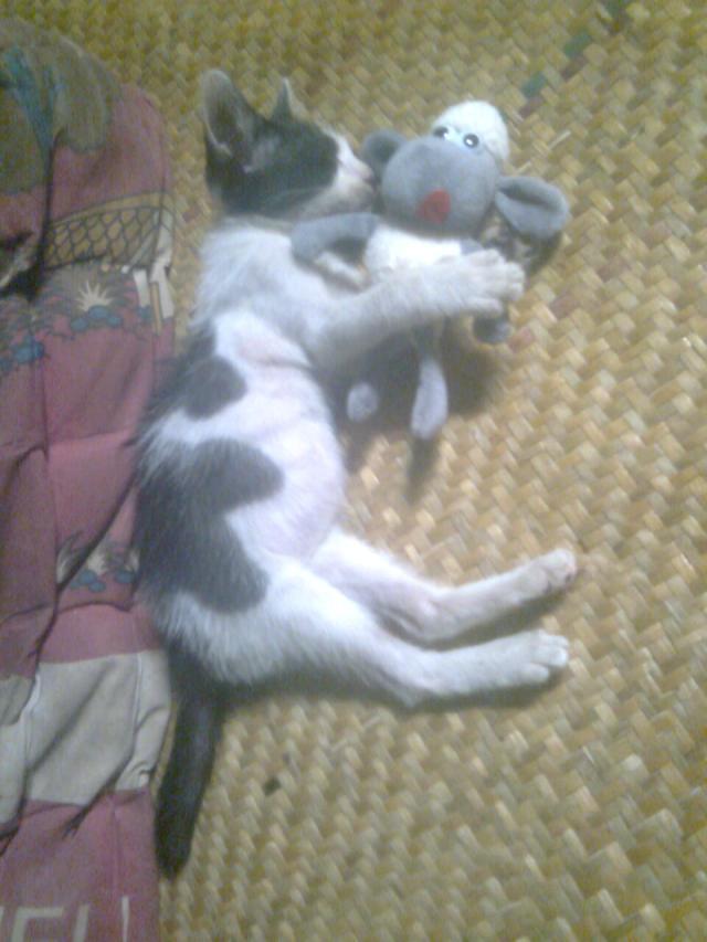 kucing unyu lagi tidur